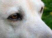 Hunde14